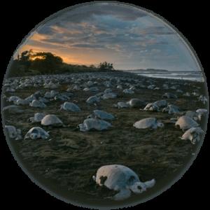schildpadden-project-witropa